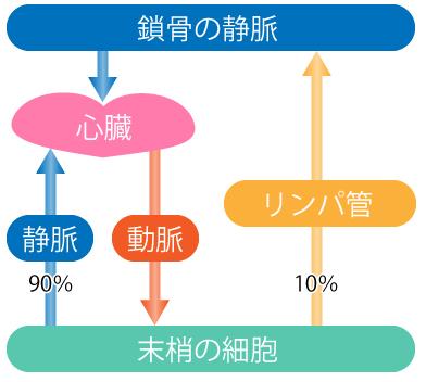 体液の循環の図 image of body fluid circulation