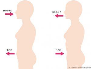 腹式呼吸の図